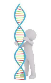 Ny forskning i stamceller